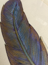 Blue Angel Feather