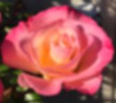 IMG_2452_edited.jpg