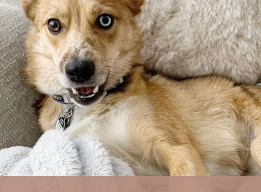 Ollie's Doggie Gift Guide