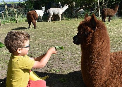 child and alpaca.jpg