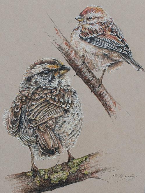 Sparrow's Gaze (Digital Copy)