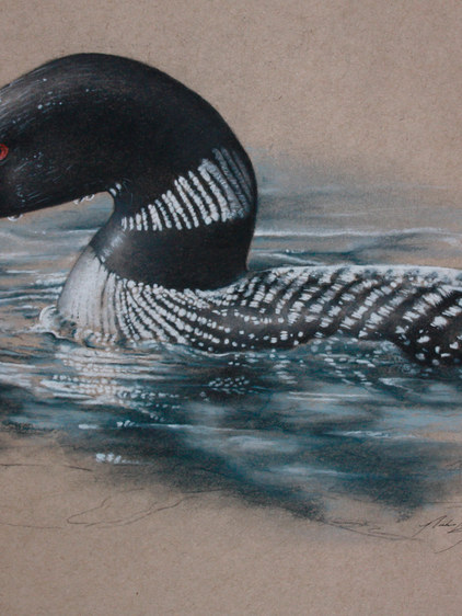 The Loon's Call