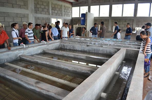 Water plant 2012.jpg