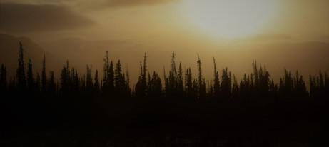 Boreal Forest Research