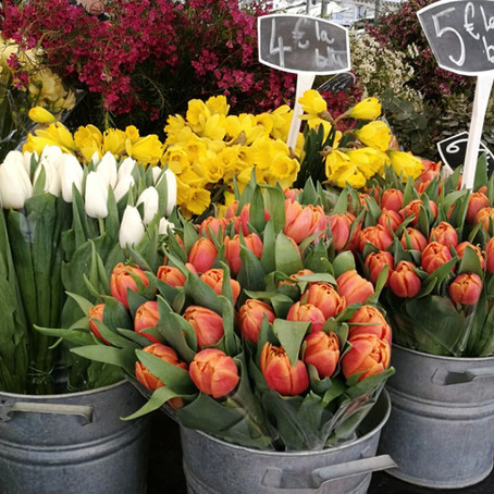 Blossoms and Far Breton