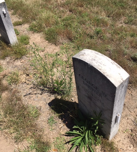 weeds growing around grave