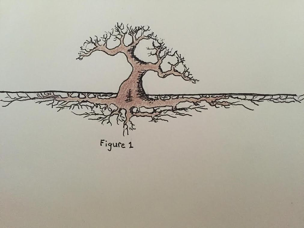 Drawing of a tree with branhes above the ground and a root system under that is wider than it is deep.