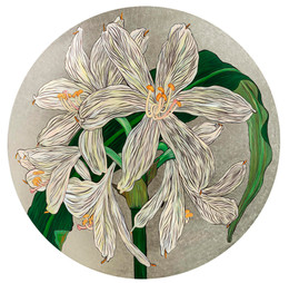 Lilium Argentum