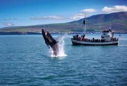80 reyk walvis