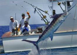 80 flo fish