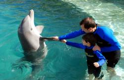 80 dolphin swim