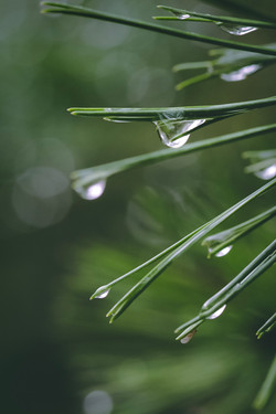 Macro Raindrops