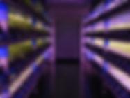 LED植物工場