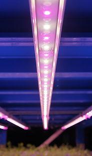 植物栽培用LED