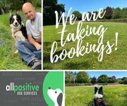 All Positive Dog Services Social Media Graphic