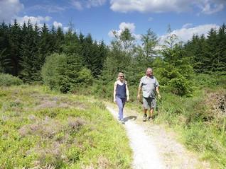 Radnor Forest