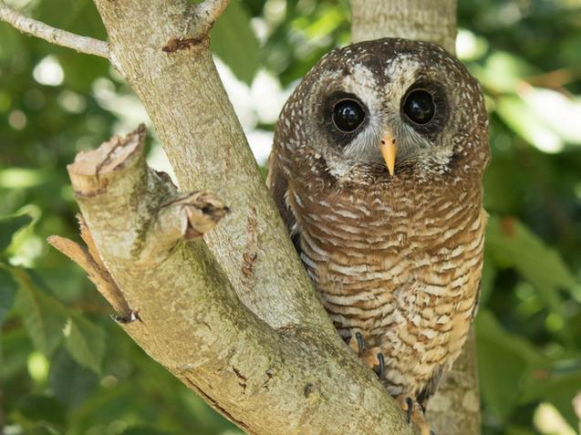 Small Breeds Farm Park & Owl Centre