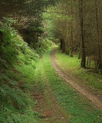 Radnor_Forest_-_geograph.org.uk_-_694368
