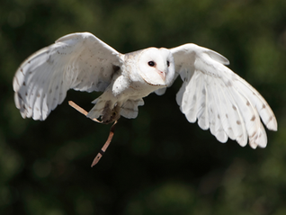 Valley View Falconry Experience