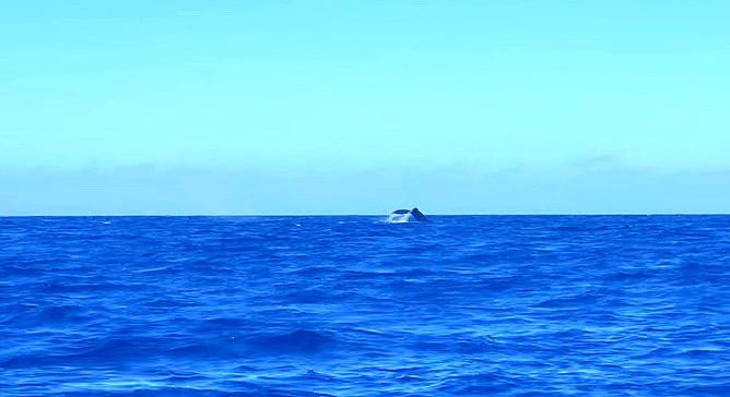 Whale Woohoo!