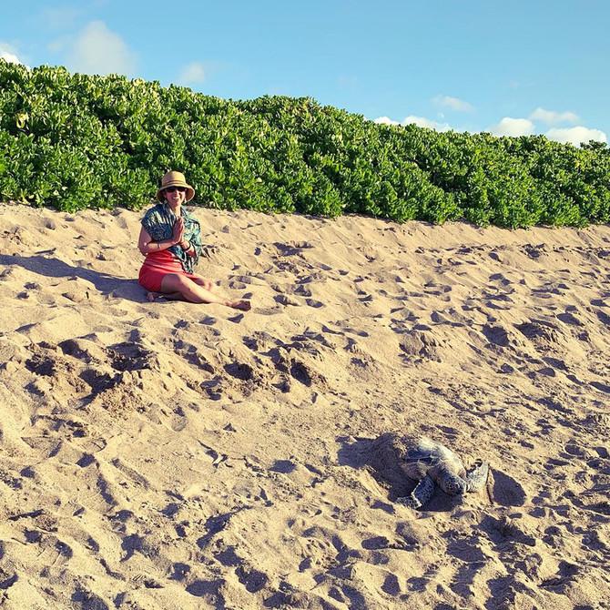 Namaste, Sea Turtle!
