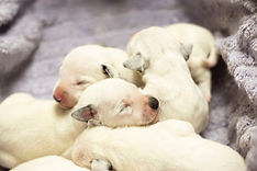 Veterinary Clinic - Small Animal Service