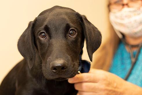 Veterinary Clinic Tracy, MN & Lamberton, MN