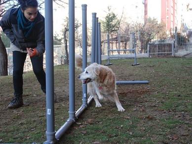Köpek Eğitmeni Lara Kavuş'la Röportaj: 2. Kısım
