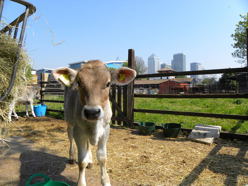 9 OF THE BEST CITY FARMS IN LONDON TO VISIT WITH KIDS