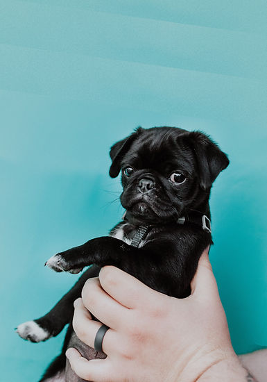 Welcome to Pet Adoption UK