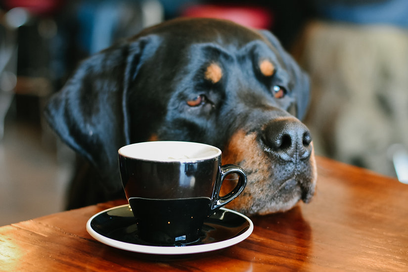 7 Adorable Animal Cafes Worth Visiting In The UK