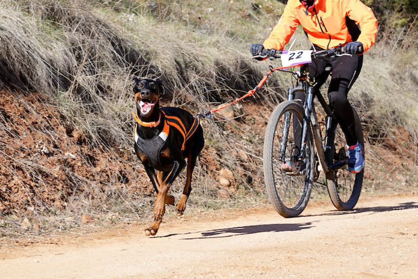 Bikejoring: Is This Adrenaline Inducing Sport Right For You and Your Dog?
