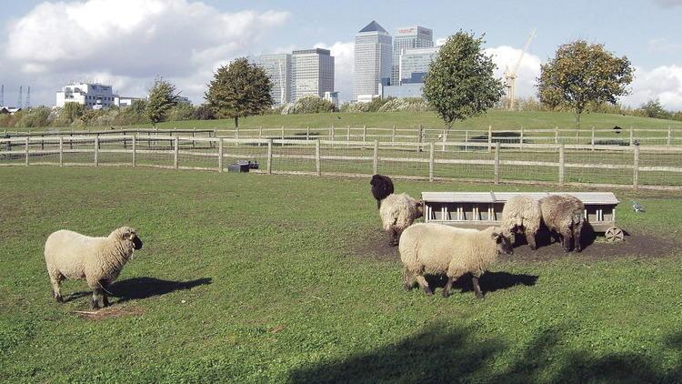 City farms in London