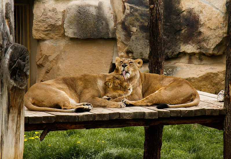 Meet The Animals At ZSL Whipsnade Zoo