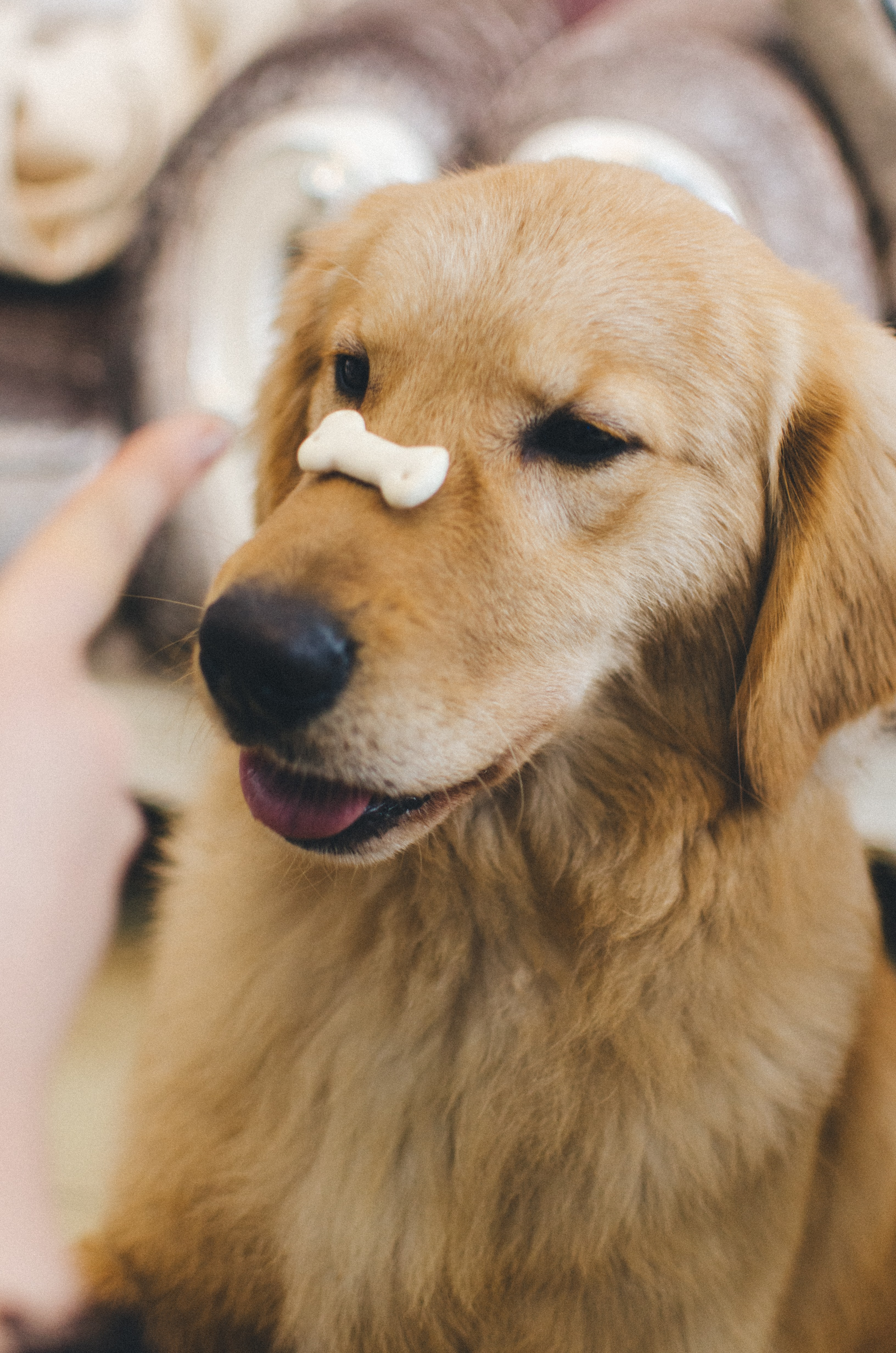 20 Unusual Tricks You Should Start Teaching Your Dog Today
