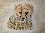 cheetah Ahren Nolan Year 9.jpg