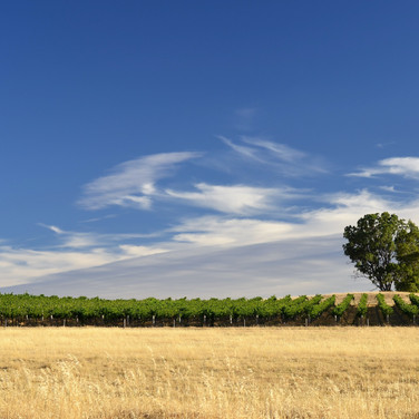 CLARE VALLEY – Adelaide, South Australia