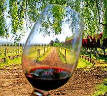 spain wine tour