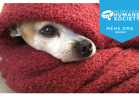 7 Tips for Winter Pet Care