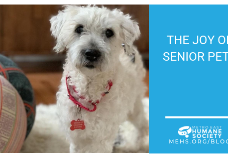 The Joy of Senior Pets