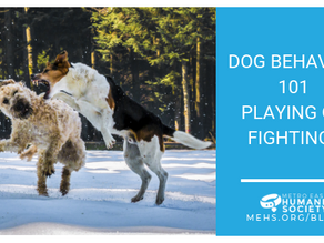 Dog Behavior 101: Playing or Fighting