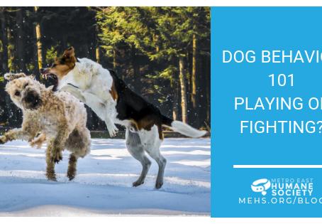 Dog Behavior 101: Playing or Fighting