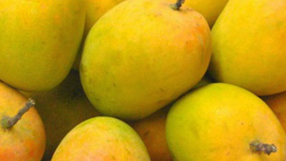 Ratnagiri Alfanso Mango