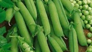 Green Peas / Mattor / Watana