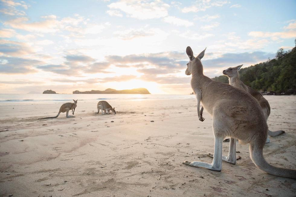 Sacred Voyage | Kangaroos on the Beach Tour | Australia