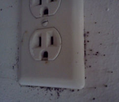 Bed Bug fecal spotting on electrical outlet
