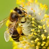 bee control service exterminator regina area