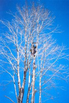 tree_beforeSM.jpg
