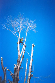 tree_afterSM.jpg