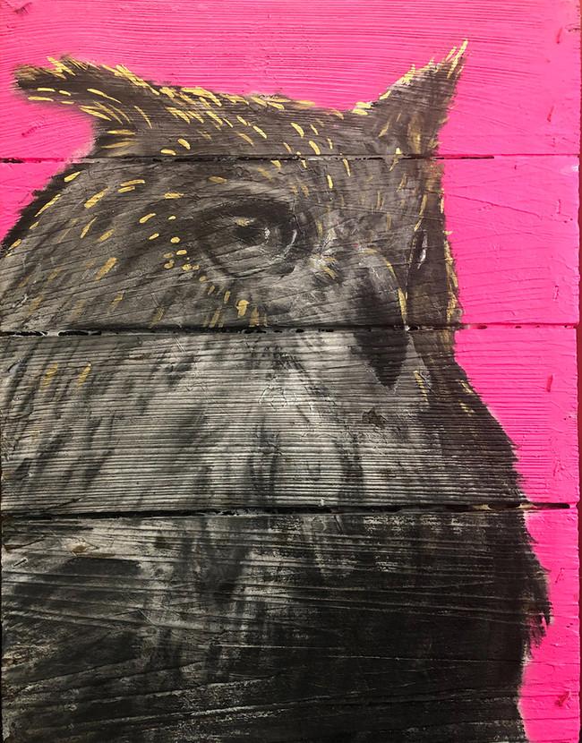 owl on magenta after leaving salon